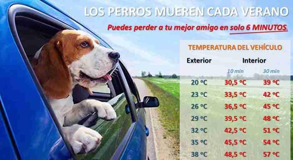 El peligro de dejar a tu perro en el coche - Vicente Velasco ...